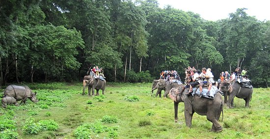 Chitwan Package Tour -1 Night 2 Days